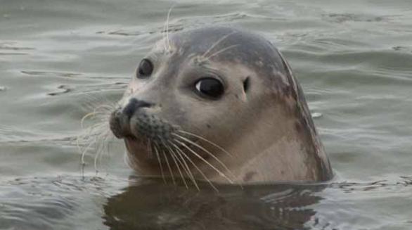 zeehond-alleen